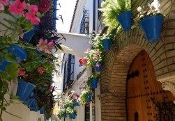 flowers-cordoba
